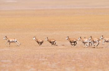 奔跑吧----- 祝贺荣获野生动物首页精华!