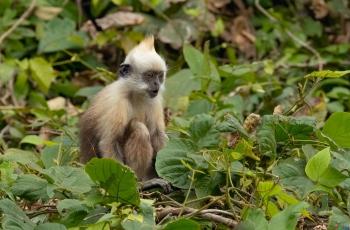 少年猴(祝贺荣获首页动物精华)