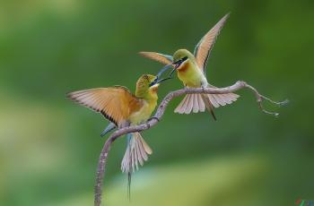 畅想:轻便、快捷、强大的拍鸟神器