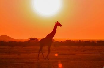 逆光下的长颈鹿   ---- 祝贺荣获野生动物首页精华!
