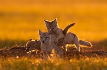 嬉闹  ---- 祝贺荣获野生动物首页精华!