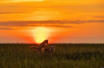 夕下的欢乐~~~贺图获《首页动物精华》