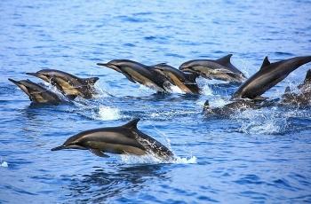 欢快的海豚------祝贺佳作荣获每日一图