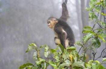 索尼Alpha9 拍摄野生动物之旅