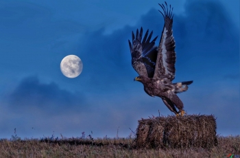 月夜草原雕