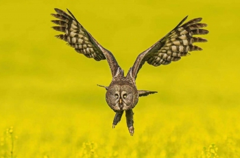 7月31日海拉尔乌林鸮拍摄活动