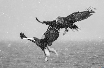 空中追逐  ---- 祝贺荣获黑白影像首页精华!