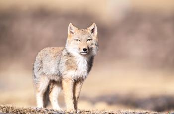 青海——野生动物的天堂