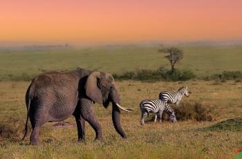 和谐相处  ----  祝贺荣获野生动物首页精华!