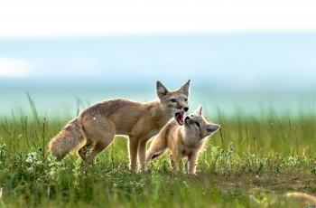 母口索食   ---- 祝贺荣获野生动物首页精华!