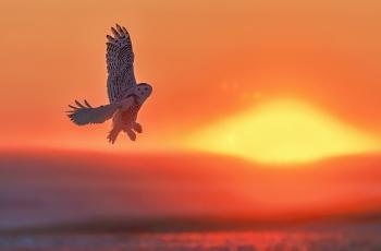 草原升起红太阳---祝贺老师佳作荣获每日一图