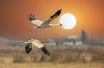 早安中国鸟网艺术创意版