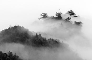 雾   ---- 祝贺荣获黑白影像首页精华!