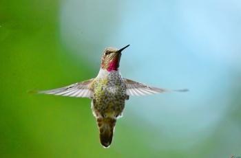 不同的鸟类视觉