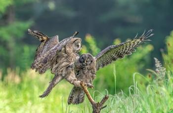 学习飞翔(祝贺荣获每日佳作)