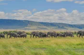 非洲象-----贺获首页动物精华