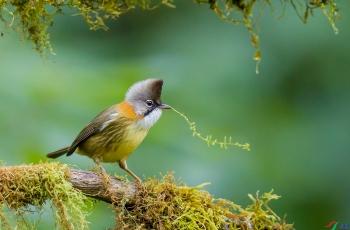 在小水池洗澡的鸟儿