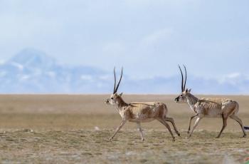 奔跑吧兄弟-----贺获首页动物精华!