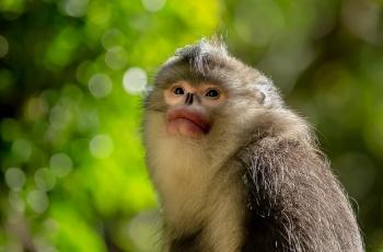滇金丝猴(荣获首页动物精华)
