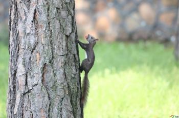 这是什么松鼠?-----贺获首页动物精华!