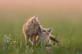 温情时刻-----贺获首页动物精华!