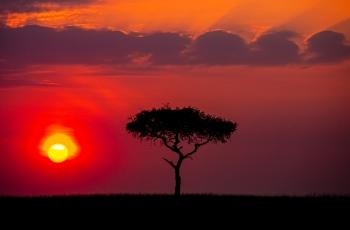 非洲草原的黎明时刻,(祝贺留光溢彩老师荣获首页综合精华)