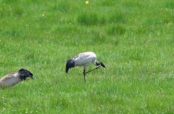 诺尔盖大草原的鸟