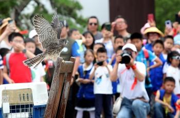 慈溪野保会救助放飞野生鸟类170多只