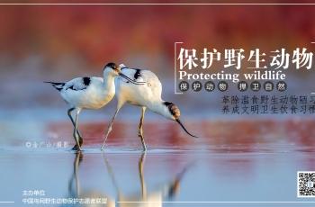 今日人民日报全国党媒信息公共平台发文《拍鸟,爱鸟还是害鸟?》》