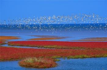 北戴河湿地秋色浓