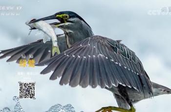 【2020-11-17】央视17频道《中国三农报道》片尾生态图片/视频公益展示
