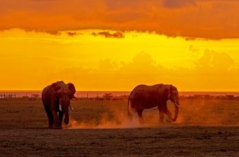 夕阳下的非洲象  ----  祝贺荣获动物首页精华!