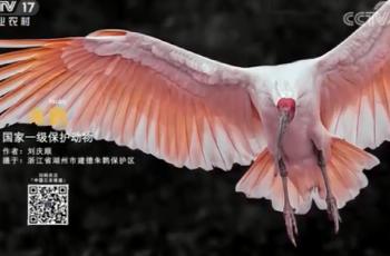 【2020-12-05】央视17频道《中国三农报道》片尾生态图片/视频公益展示