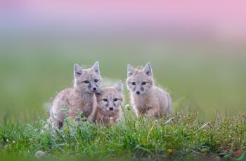三只萌宝等妈妈!  ----  祝贺荣获动物首页精华!