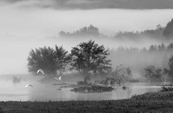 穿越迷雾  ----  祝贺荣获黑白影像首页精华!