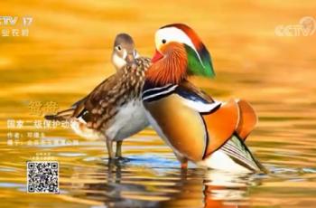 【2020-12-14】央视17频道《中国三农报道》片尾生态图片/视频公益展示