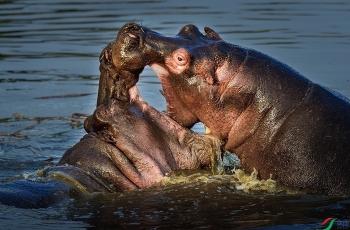 母子嬉戏  ----  祝贺荣获野生动物首页精华!