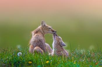 亲热母子  ----  祝贺荣获野生动物首页精华!