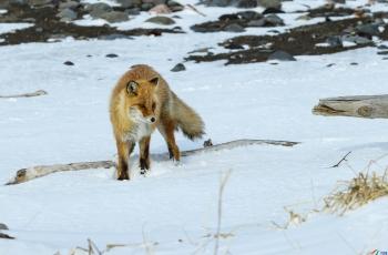 探寻  ----  祝贺荣获野生动物首页精华!