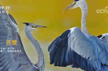 【2020-12-15】央视17频道《中国三农报道》片尾生态图片/视频公益展示