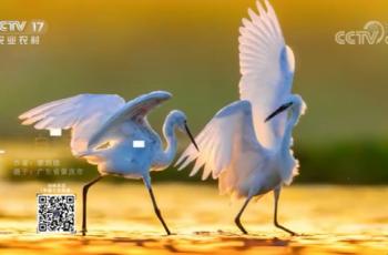 【2020-12-16】央视17频道《中国三农报道》片尾生态图片/视频公益展示