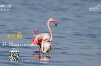 【2020-12-19】央视17频道《中国三农报道》片尾生态图片/视频公益展示