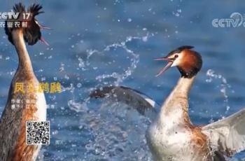 【2020-12-20】央视17频道《中国三农报道》片尾生态图片/视频公益展示