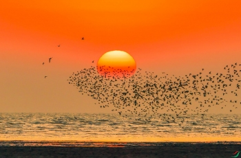 夕阳鸟浪      (恭贺老师作品荣获每日一图)