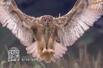 【2020-12-23】央视17频道《中国三农报道》片尾生态图片/视频公益展示
