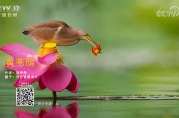 【2020-12-26】央视17频道《中国三农报道》片尾生态图片/视频公益展示