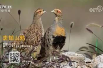 【2020-12-28】央视17频道《中国三农报道》片尾生态图片/视频公益展示