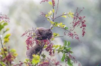 赤腹松鼠——欣采丰收果