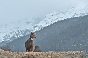 我从山中来   ----   祝贺荣获野生动物首页精华!