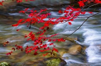 又到满山枫叶红,霜叶红于二月花